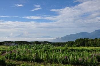 富士山と花.jpg